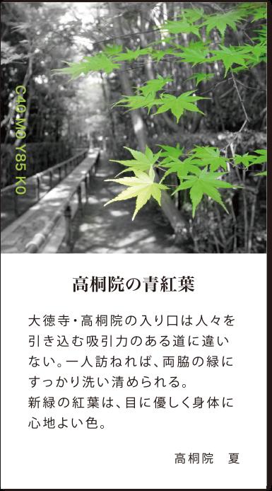 高桐院の青紅葉 大徳寺・高桐院の入り口は人々を引き込む吸引力のある道に違いない。一人訪ねれば、両脇の緑にすっかり洗い清められる。新緑の紅葉は、目に優しく身体に心地よい色。高桐院夏
